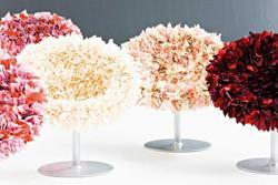 Bouquet, Moroso