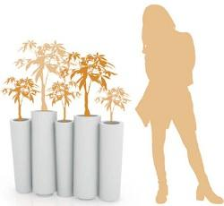 Slide: Bamboo vaso