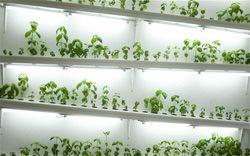 coltivazioni idroponiche_farm_shop_londra