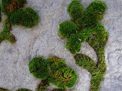 tappeto-di-muschio_Garden Rug_particolare