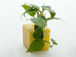 micro gardening