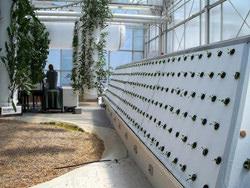 giardino orto aeroponico Chicago O' Hare airport