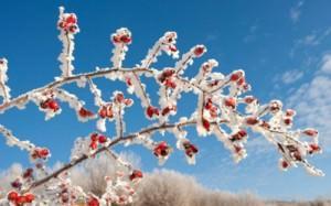 piante_gelo invernale