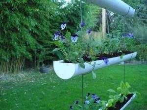orto in grondaia, Gutter garden