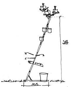 Orto verticale: schizzo scalorto
