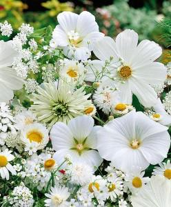 tappeto da semina, fiori bianchi mix
