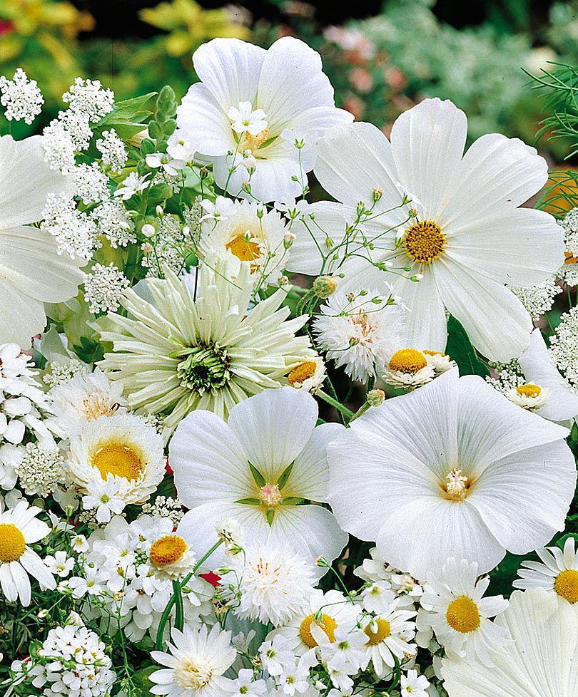 Tappeti da semina - Calendario semina fiori ...
