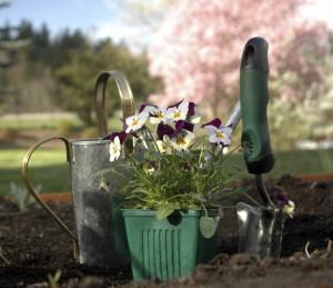 assolazione, esposizione dell'orto