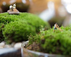 Paesaggio in miniatura - Giardini in bottiglia ...