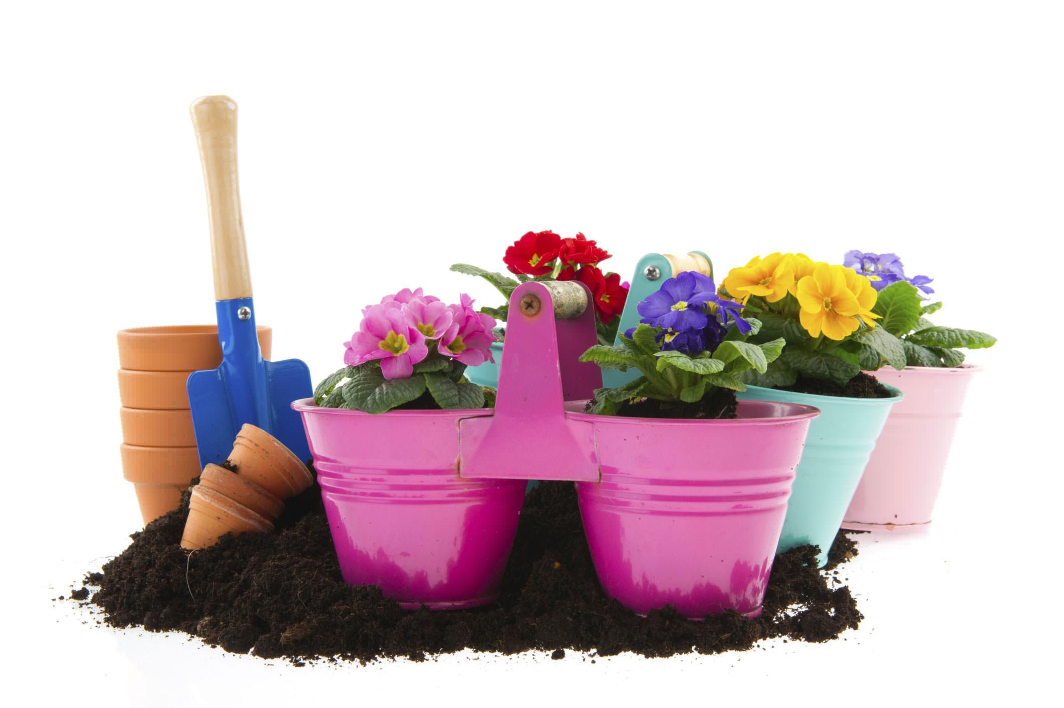 Plastica biodegradabile per il giardinaggio for Giardinaggio e fiori