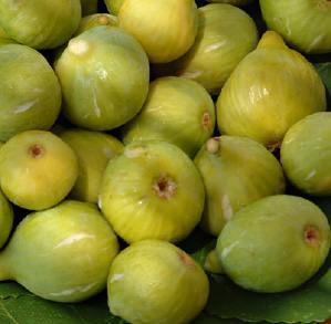 Fico frutto antico for Pianta di fico prezzo