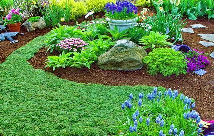 Piante tappezzanti per il giardino for Piante tappezzanti da ombra