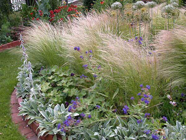 Grande confusione pagina 20 forum giardinaggio - Lavorincasa forum ...