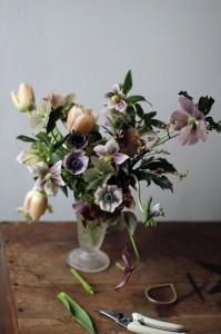 helleborus in vaso,by Sarah Ryanen
