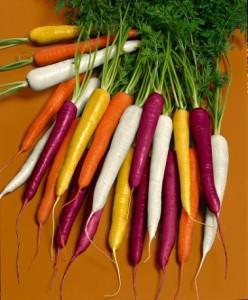 carote, semina a nastro