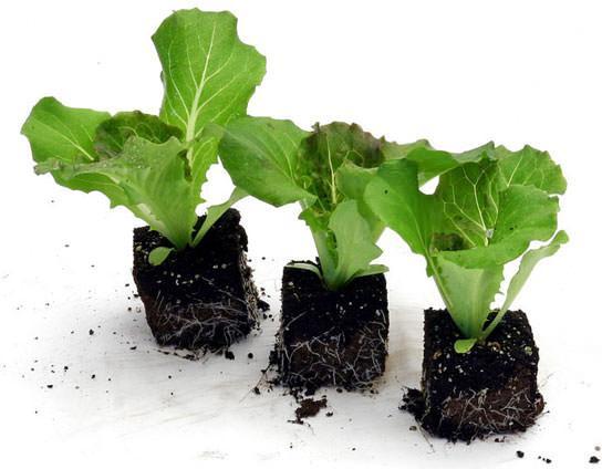 vasetti di torba per la semina