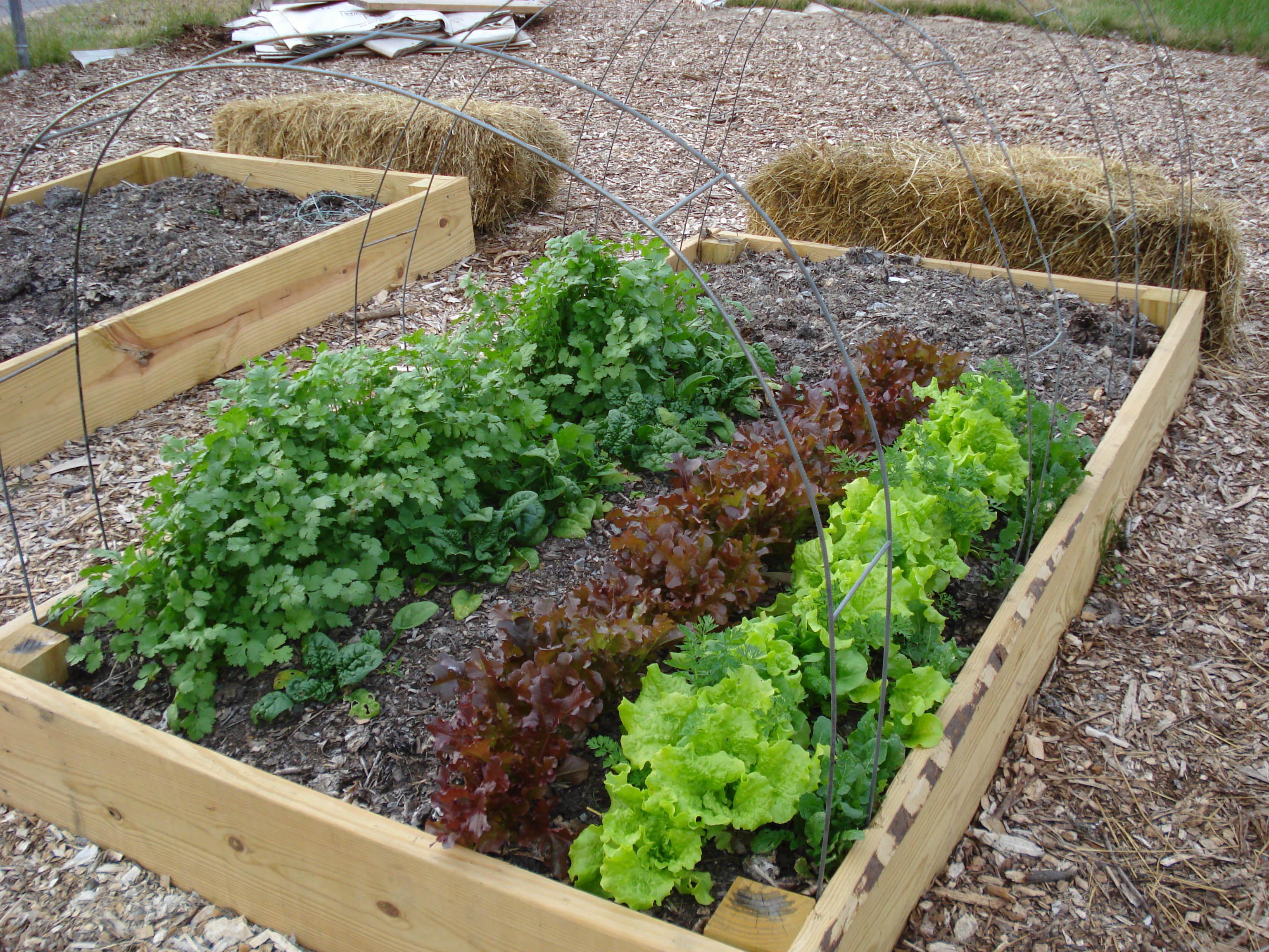 lavori orto e giardino mese di marzo