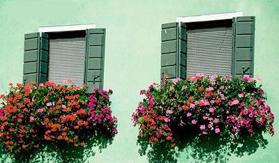 I gerani su la strada nuova for Edera artificiale per balconi