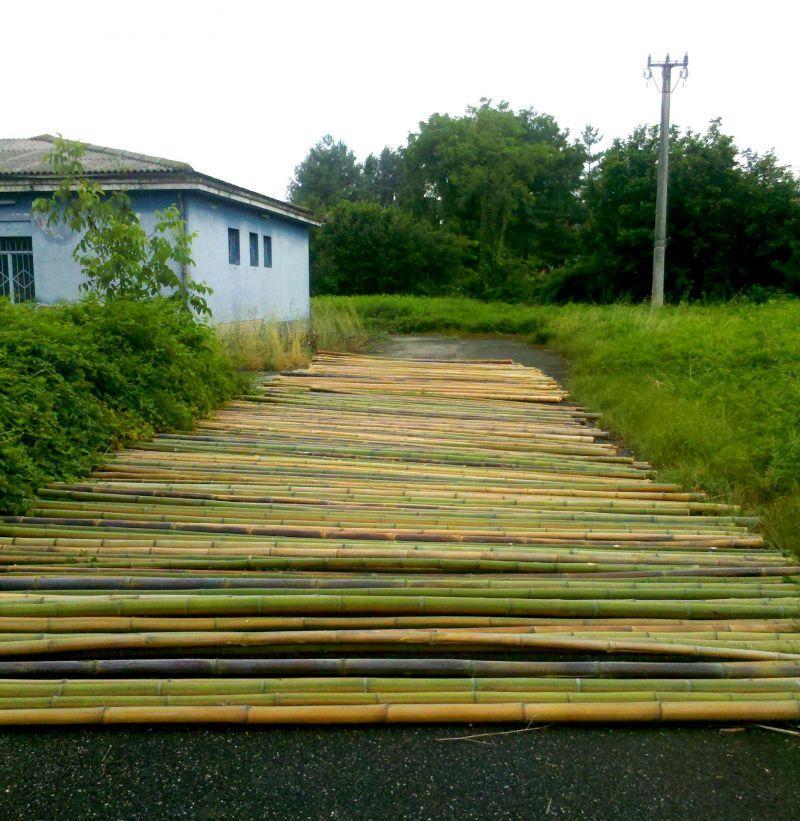 In vendita canne di bambu con diametri da 1 a 10 cm. 1