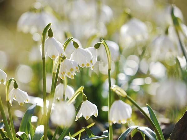 Irrigazione consigli per tutto l'anno: primavera