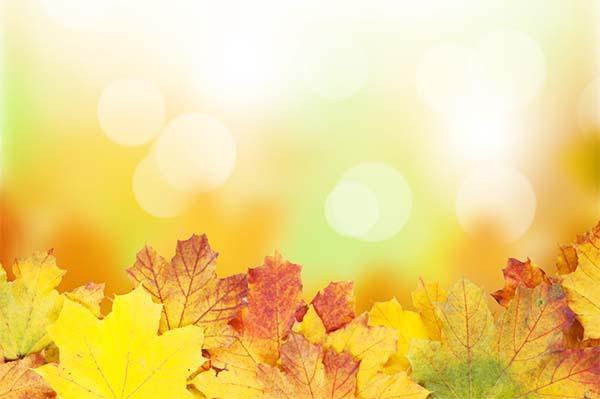 Irrigazione consigli per tutto l'anno: autunno