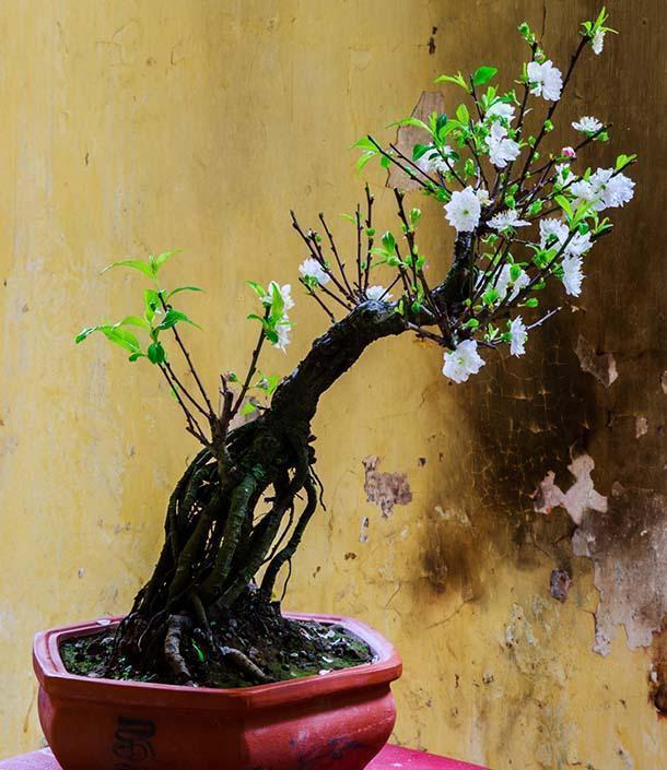 Bonsai cura e coltivazione - Cura dei bonsai in casa ...