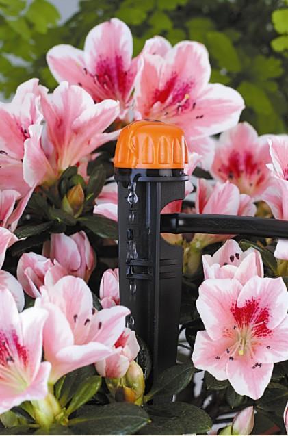 Innaffiare le piante primaverili in vaso