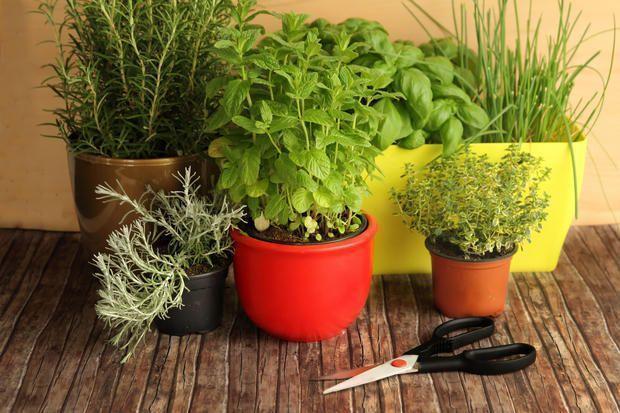 Composizione di piante in vaso