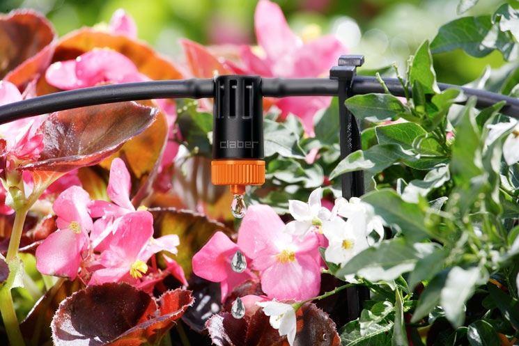 Piante primaverili: irrigazione
