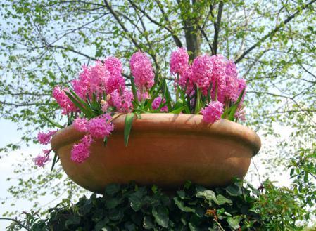 Piante primaverili da fiore in vaso