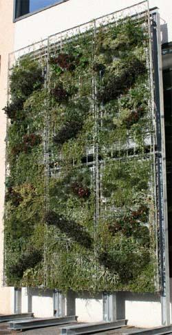 Pareti come giardini verticali - Pareti verdi per interni ...