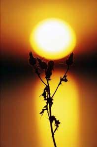 L'energia del sole