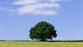 La recisione degli alberi
