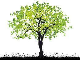 alberi e piante