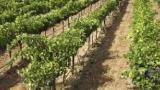 Investire in terreni agricoli e relativi annessi