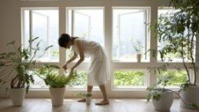 Tutori e contenitori per piante da interno
