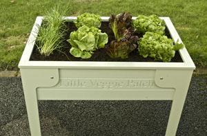 Orti sul tavolo for Temporizzatore impianto irrigazione