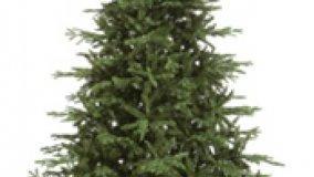 Scegliere l'albero di Natale