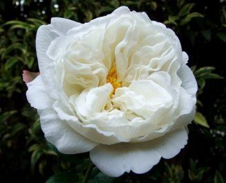 Rosa artificiale Decofiori