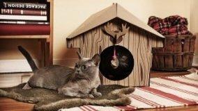 Design felino nelle cucce per gatti