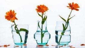 Vasi per fiori: tante idee per completare l'arredo