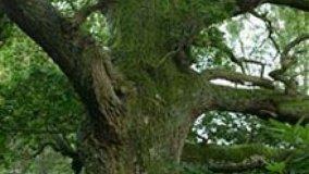 Roma per Copenaghen, 1000 alberi per l'Aniene
