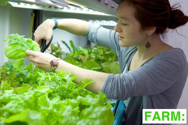 Farm: Shop London