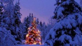 Manutenzione casalinga dell'Albero di Natale