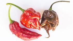 Il peperoncino più piccante: Carolina Reaper