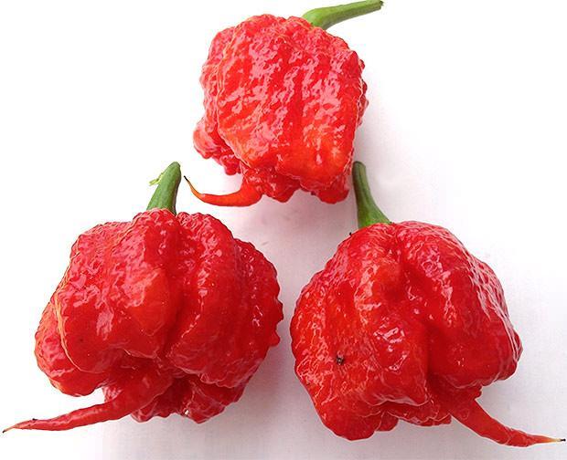 Carolina Reaper il peperoncino più piccante al mondo