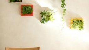 Nuove idee di Micro Gardening