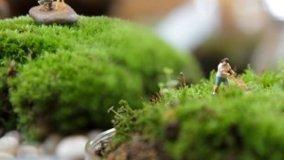 Paesaggio in miniatura