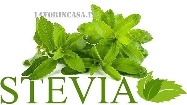 Stevia rebaudiana, dolcificante naturale: come coltivarla