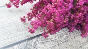 Erica che colora l'autunno